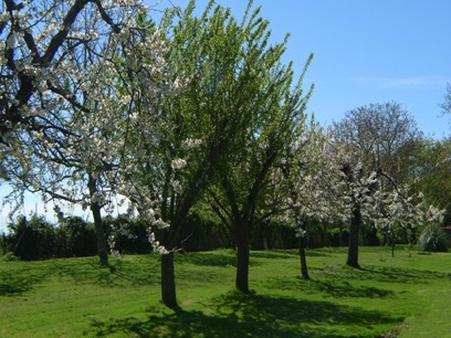 The Orchard at Le Gite Tranquille